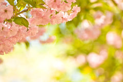Rosafarbene Blumen in der Blüte Stockfotografie