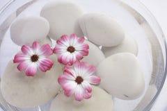 Rosafarbene Blumen des Badekurortes Lizenzfreie Stockfotografie