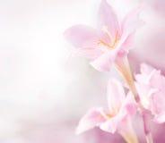 Rosafarbene Blumen des Frühlinges Stockbilder