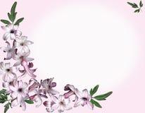 Rosafarbene Blumen des Hintergrundes stock abbildung