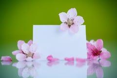 Rosafarbene Blumen des Pfirsiches Stockfoto