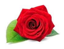 Rosafarbene Blumen des Rotes lizenzfreie stockfotos