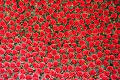 Rosafarbene Blumen des Rotes lizenzfreie stockfotografie