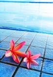 Rosafarbene Blumen durch blaues Pool Lizenzfreie Stockfotografie
