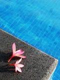 Rosafarbene Blumen durch blaues Pool Stockbilder