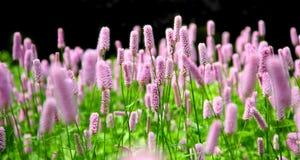 Rosafarbene Blumen in einem formalen Garten Lizenzfreie Stockfotos