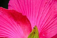 Rosafarbene Blumen im Garten Stockbilder