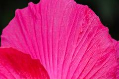 Rosafarbene Blumen im Garten Stockfotos