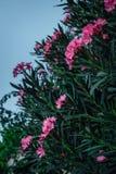 Rosafarbene Blumen mit grünen Blättern lizenzfreie stockfotografie