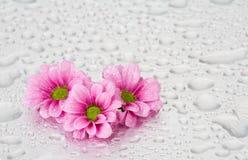 Rosafarbene Blumen mit Wassertropfen Stockfotos