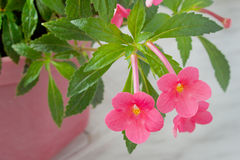 Rosafarbene Blumen steuern Anlagen automatisch an Stockbild