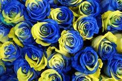 Rosafarbene Blumen Ukraine stockfotos
