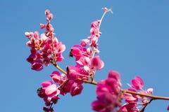 Rosafarbene Blumen und Himmel Stockfoto