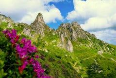 Rosafarbene Blumen und schöne geschnitzte Felsen Stockbild