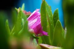 Rosafarbene Blumenansicht stockbilder