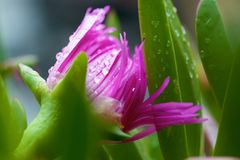 Rosafarbene Blumenansicht lizenzfreies stockbild