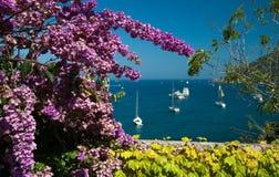 Rosafarbene Blumenansicht Lizenzfreie Stockfotos