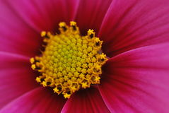 Rosafarbene Blumenbeschaffenheit Stockfoto