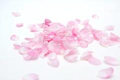 Rosafarbene Blumenblätter Stockbild