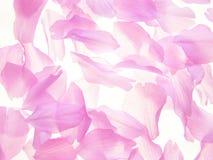 Rosafarbene Blumenblätter Lizenzfreie Stockbilder