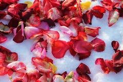 rosafarbene Blumenblätter Stockfotografie