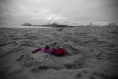rosafarbene Blumenblätter Lizenzfreie Stockfotografie