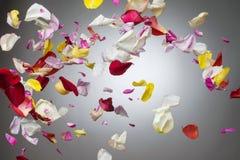 rosafarbene Blumenblätter stockfoto
