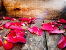 rosafarbene Blumenblätter Autumn Leaves Vase mit trockenen Blättern, Apfel und Kerzen auf dem Rausschmiß Auf einer hölzernen Besc lizenzfreie stockfotos