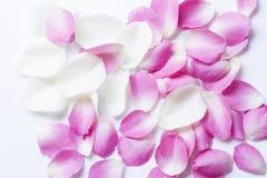rosafarbene Blumenbl?tter lizenzfreie stockfotografie