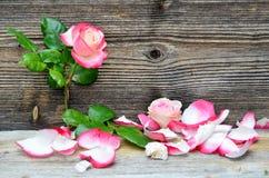 Rosafarbene Blumenblumenblätter des Holzes lizenzfreie stockfotos