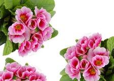 Rosafarbene Blumenkarte Lizenzfreies Stockbild