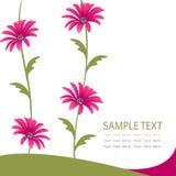 Rosafarbene Blumenkarte Stockfotografie