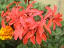 Rosafarbene Blumennahaufnahme Stockbilder