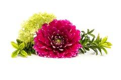 Rosafarbene Dahlie in der Nahaufnahme mit Anlagen lizenzfreie stockfotos
