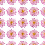 Rosafarbene Dahlieblume in einem wiederholten Muster Lizenzfreie Stockfotos