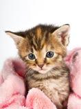 Rosafarbene Decke eingewickelt um kleines Kätzchen Lizenzfreie Stockfotografie