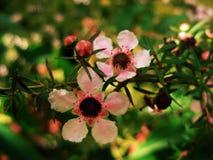 Rosafarbene Doppelblumen Stockbilder