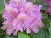 Rosafarbene exotische Blumen Stockbilder