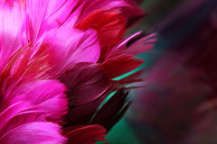 Rosafarbene Federn Stockfoto