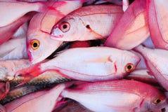 Rosafarbene Fische Stockbild
