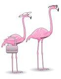 Rosafarbene Flamingo-Paare Stockfotos