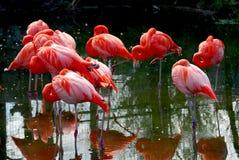 Rosafarbene Flamingos Stockfoto