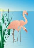 Rosafarbene Flamingos auf See mit Stöcken Stockfoto