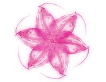 Rosafarbene Fractal-Blume Stockfoto