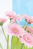 Rosafarbene Gänseblümchen auf neuem Hintergrund Lizenzfreies Stockfoto