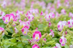 Rosafarbene Gartenblume. lizenzfreies stockbild