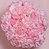 Rosafarbene Gartennelken Stockfoto