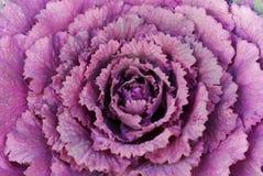 Rosafarbene gewundene Blume Stockbild