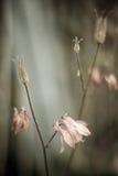 Rosafarbene Glocken - Frühlingsblumen Lizenzfreies Stockfoto