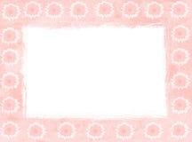 Rosafarbene Gänseblümchenfelder Stockfoto